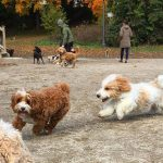 The Best Dog Parks in Toronto
