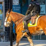 Toronto enforcement teams laid 230 charges in one week while responding to gatherings
